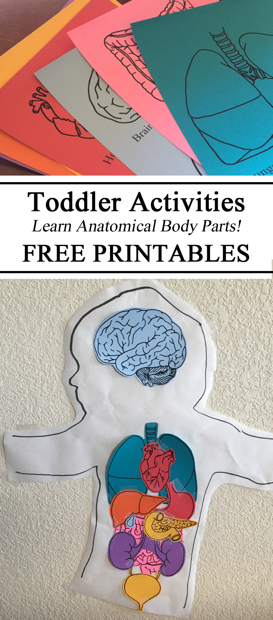 Anatomy & Physiology, My Body Unit, Anatomy Unit, Major Body Parts, Body Tracing, Preschool, Kindergarten, Montessori, Montessori Inspired, Homeschooling, Homeschool, Educational, Teacher Resources, Parent Inspiration