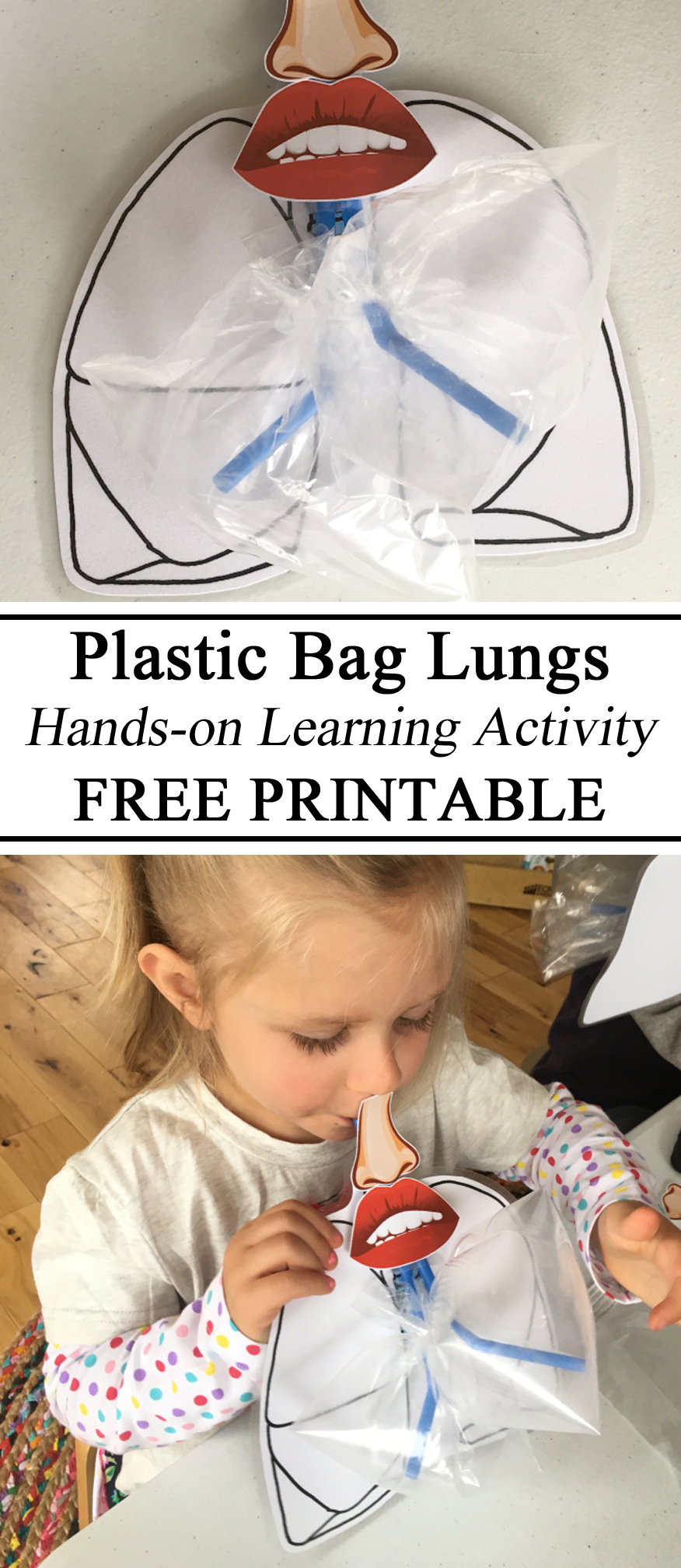 My Body Unit, Lungs, Hands on Activity, Preschool, Montessori, Waldorf, Homeschool, Homeschooling, Free Printables, Educational, Kindergarten, Elementary, Teachers, Inspiration, Resources