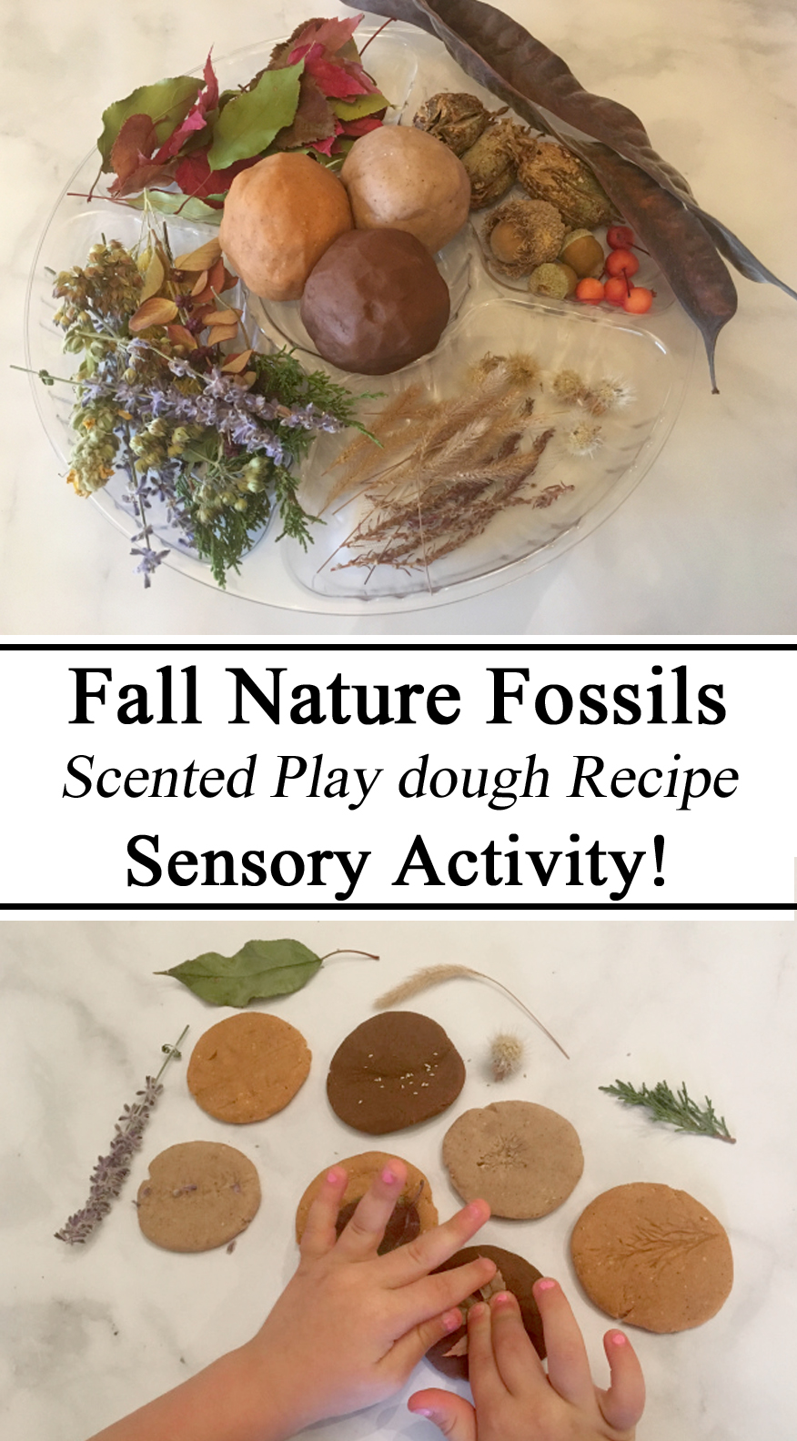 Nature Fossils, Scented Playdough, Playdoh, Recipe, Naturee Activities, Kids, Toddlers, Preschool, Homeschool, Homeschooling, Educational, Hands on Learning, Montessori, Waldorf, Homeschool, Homeschooling, Preschool, Educational, DIY