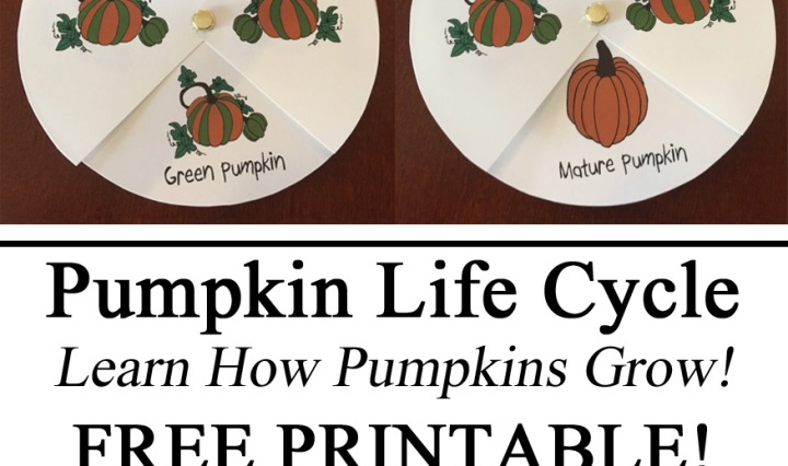 Life Cycle Pumpkin, Free Printable, Printables, Learn How Pumpkins Grow, Spinner, Download, Activity, Toddler, Preschool, Kindergarten, Elementary, Learning, Hands on Learning, Visual, Art, Homeschool Resources, Homeschooling, Montessori, Waldorf, Nature, Botany
