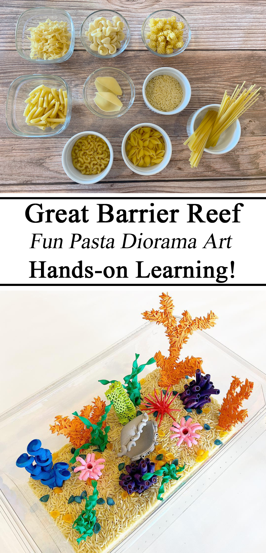 Homeschool, Homeschooling, Montessori, Activities, Diorama, Pasta, Great Barrier Reef, Scuba Diving, Artistic, Model, Hands on Learning, DIY, Pasta Art, Arts & Crafts, Activities for Kids, Ocean, Coral Reef, Learning, Educational, Creative