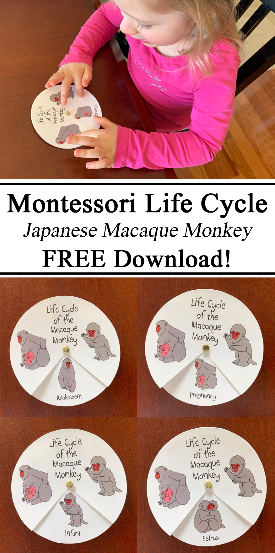Montessori Inspired Ideas Inspiration Life Cycle Japan Japanese Macaque Monkey Snow Monkey Spinner DIY Free Download Printables Printable Resources Homeschool Homeschooling #travelingthroughlearning little passports Culture Global Citizens Learning Educational Waldorf Preschool Teacher Kindergarten PreK Early Childhood Education STEM STEAM How to