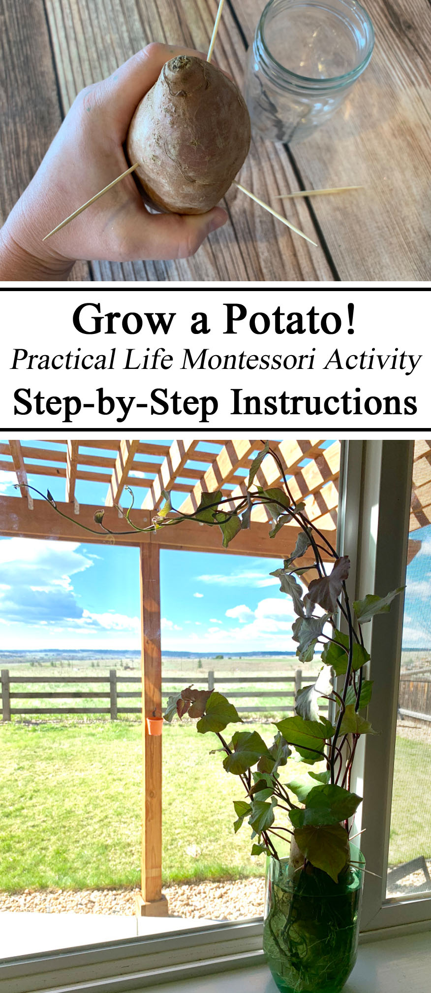 Montessori, Inspired, Hands on Learning, Activity, Ireland, Great Potato Famine, Botany, STEM Education, STEAM, Practical Life, Preschool, Kindergarten, Educational, Learning, Gardening, PreK, Waldorf, Unschooling, Unschool