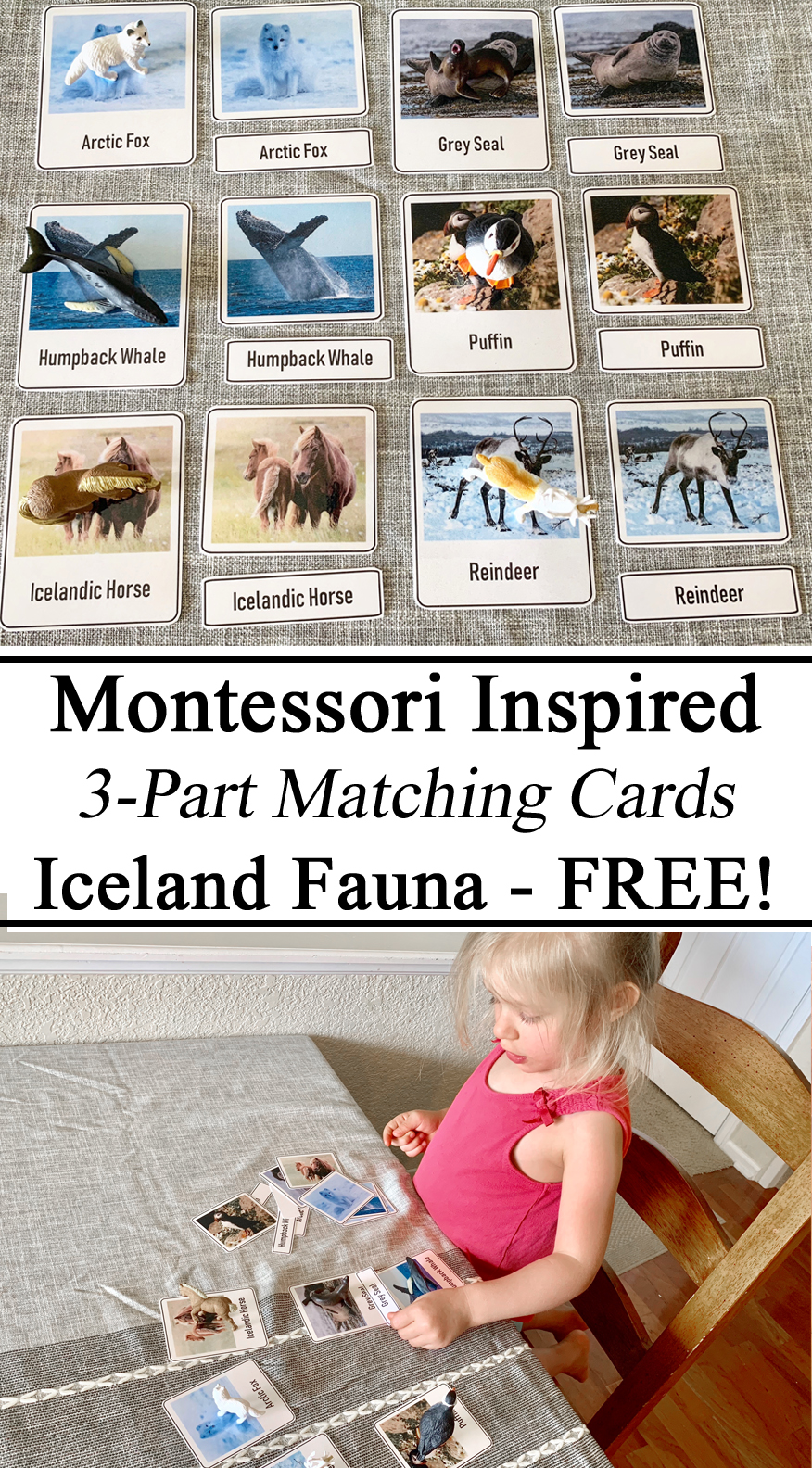 Homeschool, Homeschooling, Montessori, Inspired, Inspiration, 3-Part Cards, Iceland Icelandic Fauna Animals of the World, Miniatures, Figurines, Preschool, PreK, Kindergarten, Educational Resources, Learn to Read, Match, Unschooling, Printables, Early Childhood Education, STEM STEAM Ocean Acquatic Anaimals, Puffin, Humpback Whale, Icelandic Horse, Reindeer, Caribou, Artic Fox, Grey Seal