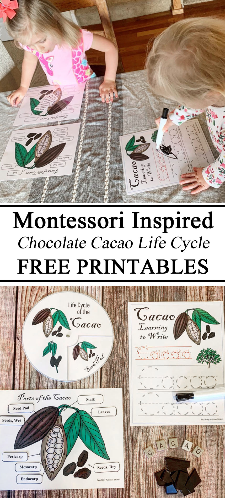 Cocoa, cacao, chocolate Montessori Inspired Resources Learning Pack Learn Educational Printables FREE Download Life Cycle Color Drawings Learning to Write Parts of Sensory Activity Tasting Homeschool Guatemala South American Unit Study Studies Unschooling PreK Preschool Kindergarten